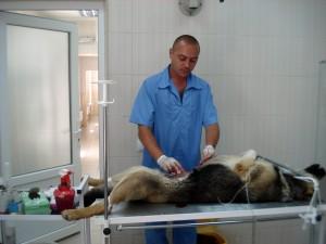 Хирургическое лечение панкреатита у собаки