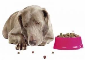 Панкреатит и его проявление у собак