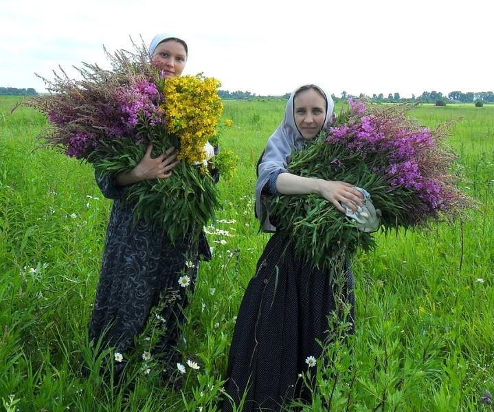 Лекарственная трава иванов чай
