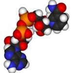 какие ферменты для поджелудочной железы
