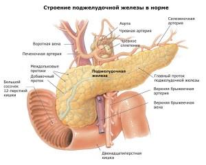 как выглядит поджелудочная железа