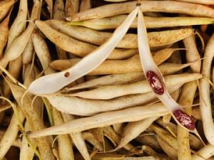 какие травы понижают сахар в крови