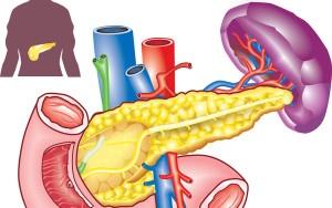 Что делает поджелудочная железа
