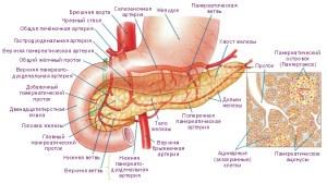 Общая картина протоков в поджелудочной железе
