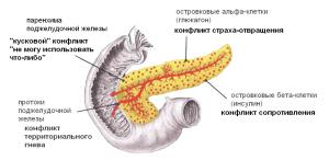Процесс работы поджелудочной железы