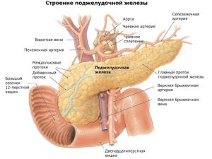 Какой орган вырабатывает ферменты для пищеварения