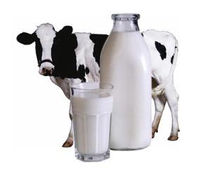 Почему от молока вздувается живот