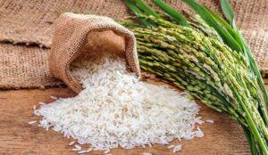 зерно риса